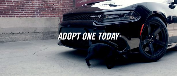 adopt one today ad for dodge charger