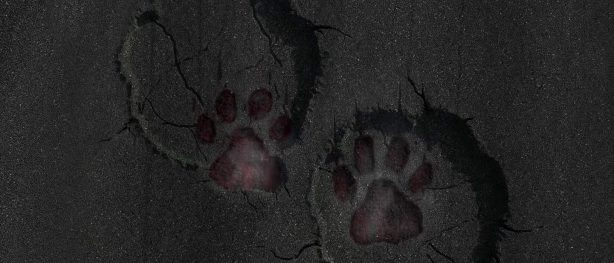 Elephant footprints over cat footprints